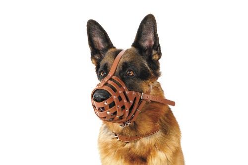 Vierbeinerwelten_Kategorie_Hundemaulkorb-1