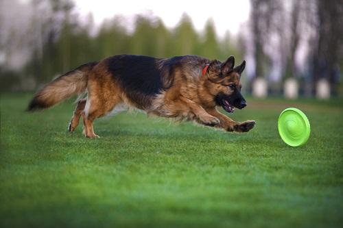 Vierbeinerwelten_Kategorie_Hunde_Wurfspielzeug-2
