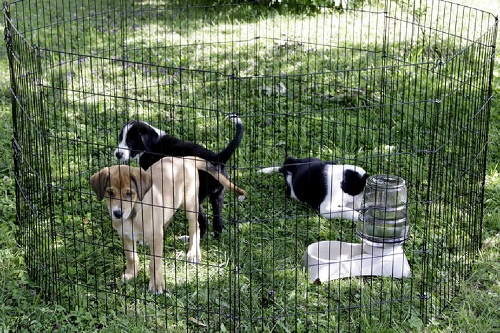 Vierbeinerwelten_Kategorie_Hundenapf-3