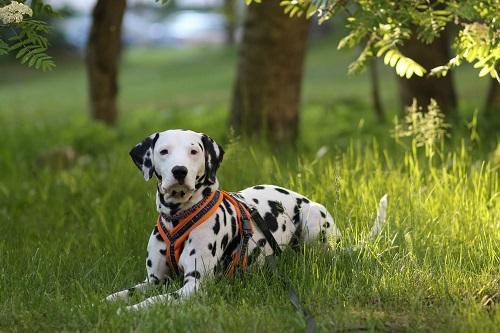 Vierbeinerwelten_Kategorie_Hundegeschirr-1