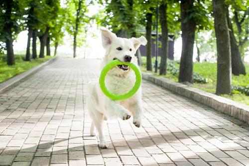 Vierbeinerwelten_Kategorie_Hunde_Wurfspielzeug-3