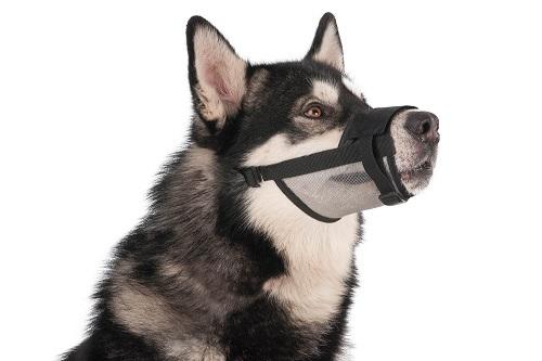 Vierbeinerwelten_Kategorie_Hundemaulkorb-3