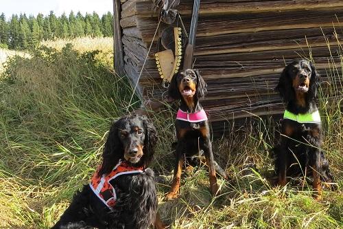 Vierbeinerwelten_Kategorie_Hunde_huette-2
