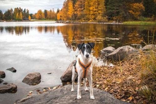 Vierbeinerwelten_Kategorie_Hunde_Kotbeutel-2