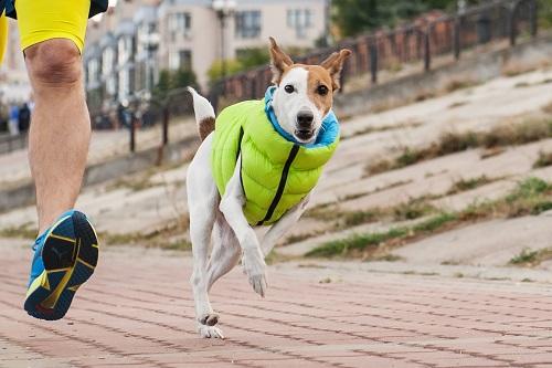 Vierbeinerwelten_Kategorie_Hunde_Sportbekleidung-2