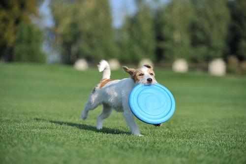 Vierbeinerwelten_Kategorie_Hunde_Snackbeutel-3