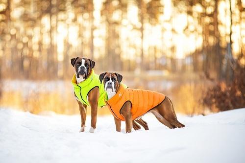 Vierbeinerwelten_Kategorie_Hundewesten-2