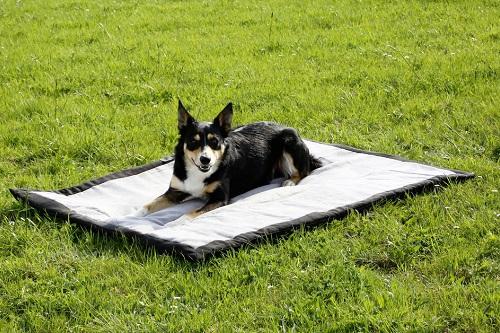 Vierbeinerwelten_Kategorie_Hundedecke-2