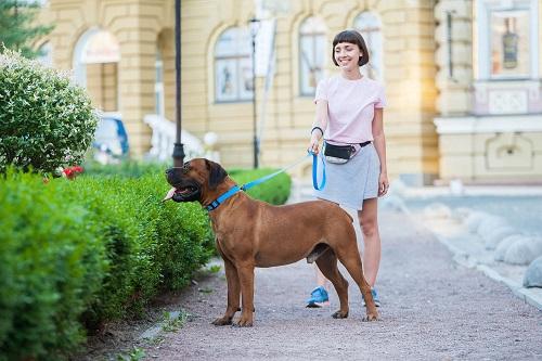 Vierbeinerwelten_Kategorie_Hunde_Kotbeutel-1