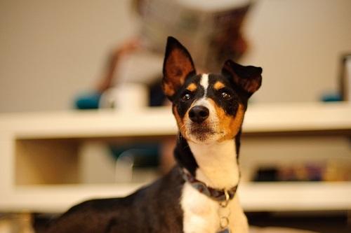 Vierbeinerwelten_Kategorie_Hunde_Automat-3