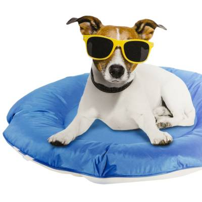 Hunde Matte AFP Chill Out Schwimmendes Kissen, Maße:86 x 86 x 10 cm