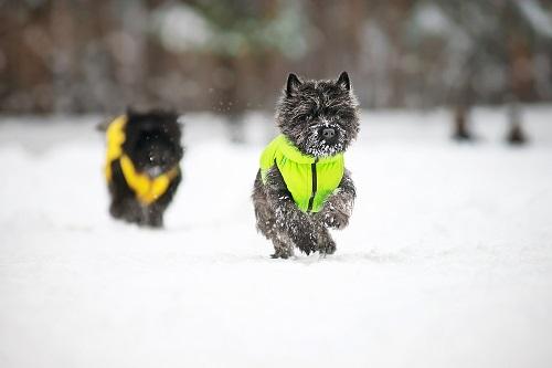 Vierbeinerwelten_Kategorie_Hundebekleidung-1