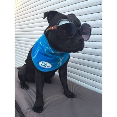 Hunde Halsband AFP Chill Out-Bandana XL, Maße:53 bis 620 mm