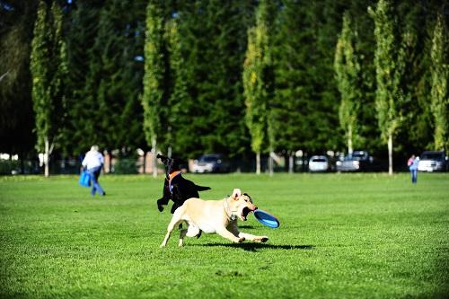 Vierbeinerwelten_Kategorie_Hunde_Themenwelten-2