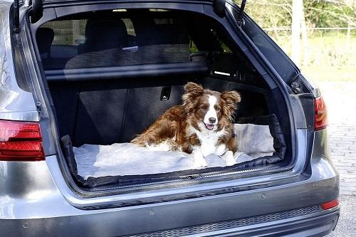 Vierbeinerwelten_Kategorie_Hundetransportbox-1
