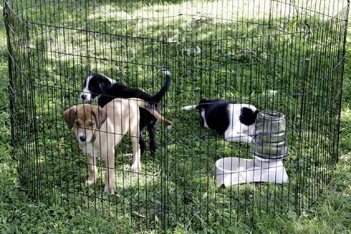 Vierbeinerwelten_Kategorie_Hundewelpen_Spielzeug-1