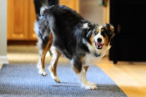 Vierbeinerwelten_Kategorie_Hunde_Automat-2
