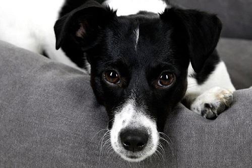 Vierbeinerwelten_Kategorie_Hunde_Kuscheltier-2