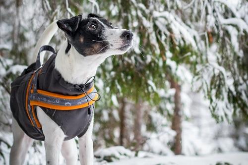 Vierbeinerwelten_Kategorie_Hundepullover-2