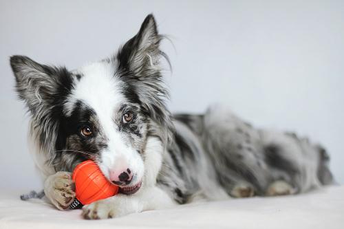 Vierbeinerwelten_Kategorie_Hundeintelligenz-2