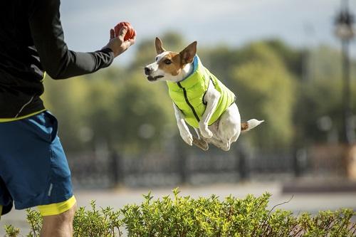 Vierbeinerwelten_Kategorie_Hundewesten-1