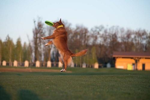 Vierbeinerwelten_Kategorie_Hundetraining-3
