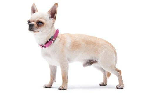 Vierbeinerwelten_Kategorie_Hunde_Transporttasche-1