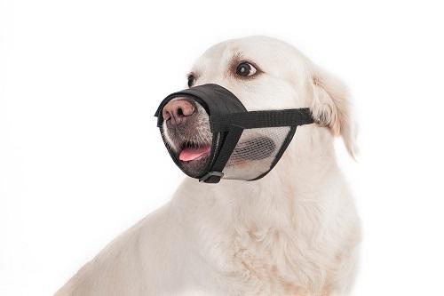 Vierbeinerwelten_Kategorie_Hundemaulkorb-2