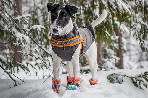 Vierbeinerwelten_Kategorie_Hundeschuhe_Pfotenschutz-2