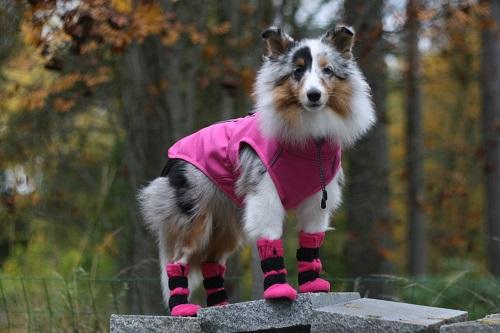 Vierbeinerwelten_Kategorie_Hunde_Sportbekleidung-3