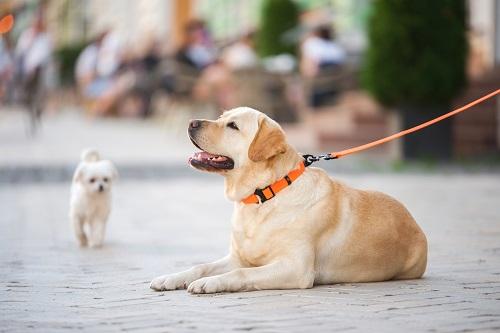 Vierbeinerwelten_Kategorie_Hunde_Erziehung-3