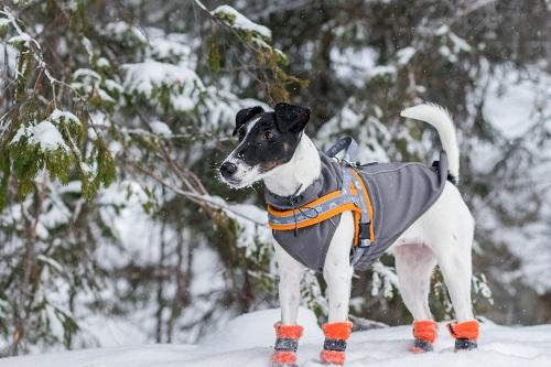 Vierbeinerwelten_Kategorie_Hundebekleidung-3