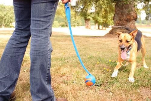 Vierbeinerwelten_Kategorie_Hunde_Wurfspielzeug-1