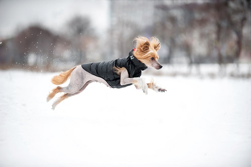 Vierbeinerwelten_Kategorie_Hunde_Sportbekleidung-1