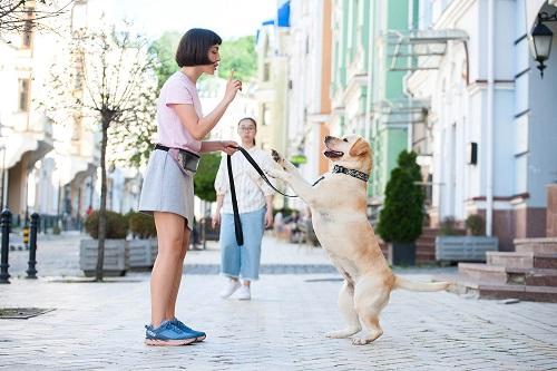 Vierbeinerwelten_Kategorie_Hunde_Erziehung-1