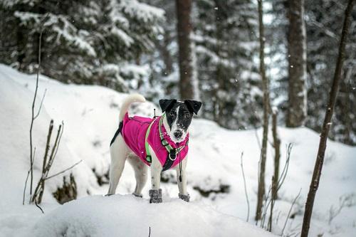 Vierbeinerwelten_Kategorie_Hundeschuhe_Pfotenschutz-3