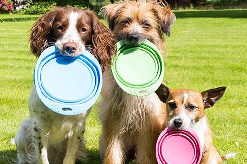 Vierbeinerwelten_Kategorie_Hundefutter-4