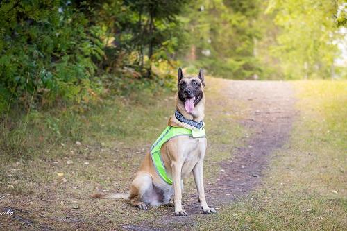 Vierbeinerwelten_Kategorie_Hunde_Handkarren-3