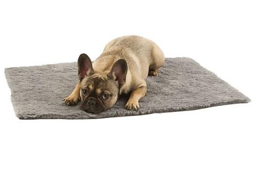 Vierbeinerwelten_Kategorie_Hundeschlafplatz-1