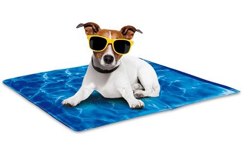 Vierbeinerwelten_Kategorie_Hundematte-2