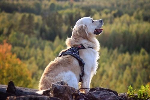 Vierbeinerwelten_Kategorie_Hundegeschirr-3