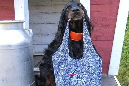 Vierbeinerwelten_Kategorie_Hunde_Transporttasche-3