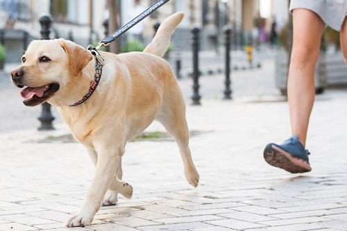 Vierbeinerwelten_Kategorie_Hundeguertel-1